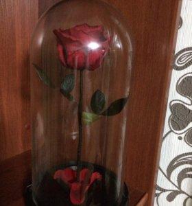 Роза в куполе