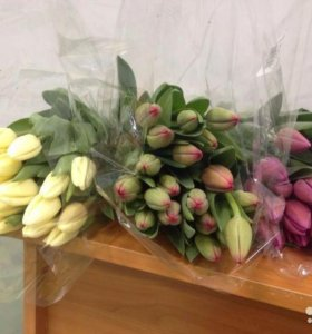 Тульпаны на 8 марта (голландские)