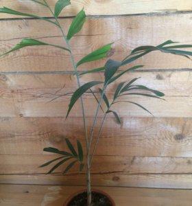Продаю домашние растения