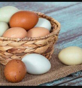 Яйца домашние куриные и утиные