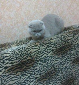 Нужен срочно котик для вязки желательно бесплатно