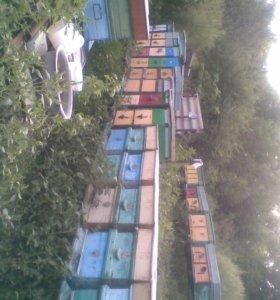 Пасека, пчелопакеты, пчелосемьи, суш, рамки новые.