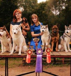Хендлер выставка собак
