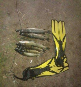 Ласты для подводной охоты и даайвинга