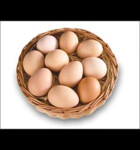 Яйцо инкубационное от домашних несушек