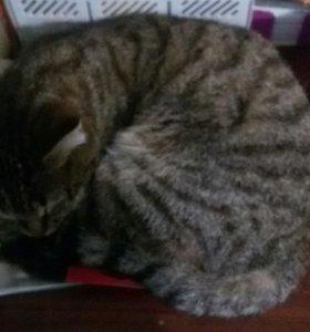 Отдам в добрые руки кошку зовут Фрося