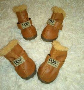 Ботиночки на собачку