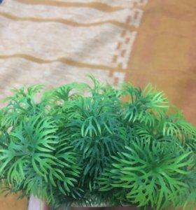 Растение в аквариум