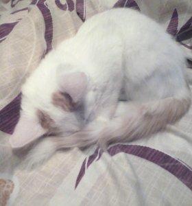 Отдам котенка))