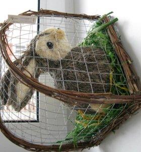 Кролик в клетке (новый с биркой)