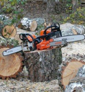 Спил деревея