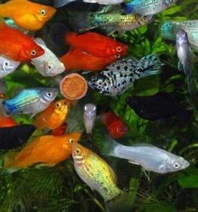 Привезу рыбок