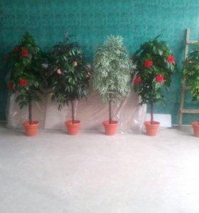 Декоративные деревья и цветы .