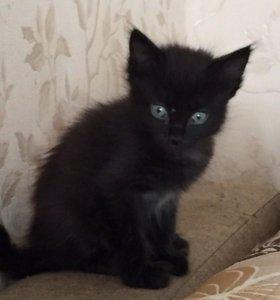 Котята(кот )
