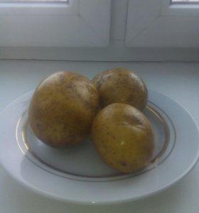Продам картошку