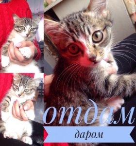 Котёнок в Мельниково