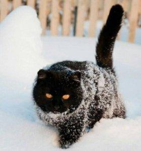Услуги кота