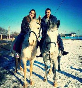 Конные прогулки, обучение верховой езде. Фотосесси