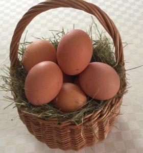 Продам домашние яйца и тушки кроликов