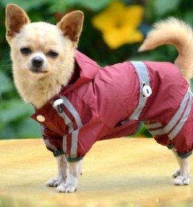 Осенний гардероб для маленькой собачки