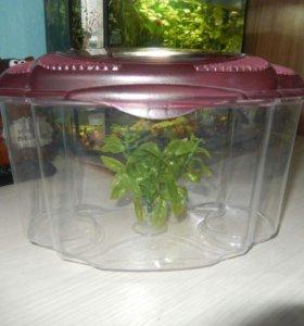 Аквариум для рыбки-петушка