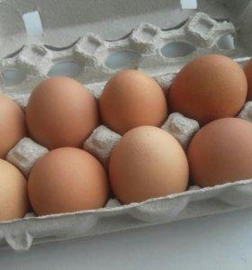 домашние яйца отборные