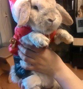 Кролик для вязки.