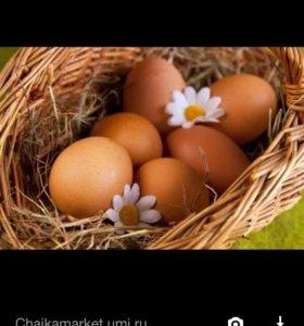 Яйцо домашнее 55р
