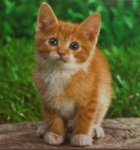 Отдадим котика в добрые руки.