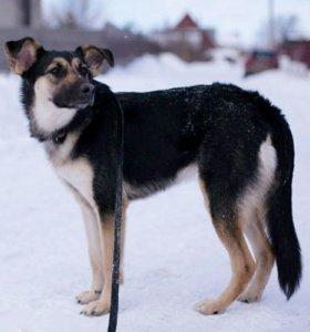 Собака-праздник Марта в самые добрые руки!