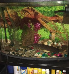 Продам панорамный аквариум 50 литров