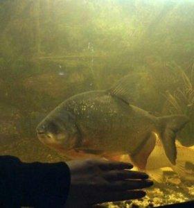 Аквариумные рыбки(для большого аквариума)