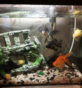 Аквариум 50 литров с рыбками