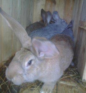 Кролики 4 мес.