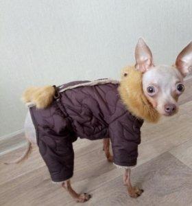 зимний комбинезон для собаки размера S