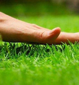 Продам семена газона(Универсальный)