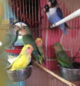 Попугай птици