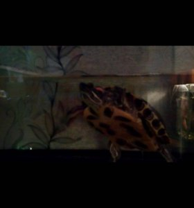 Аквариум 20 литров +2 черепахи:)