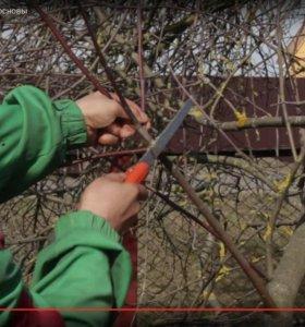 Обрезка садовых плодовых