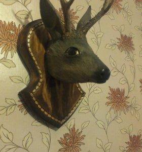 Продаю голову сибирского козла !!или обмен !!!