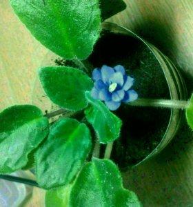 Излишки цветов