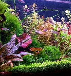 Мхи и растения.
