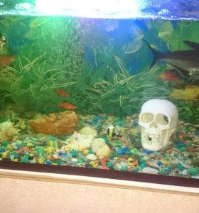 Продаю аквариум с рыбами,совсеми принодлежностями