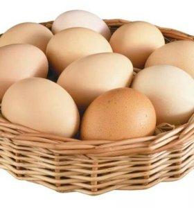 Яйца куриные, домашнии