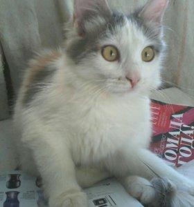Котёнок Нюша
