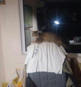 Котята-мышеловки