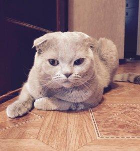 Кот (вязка)