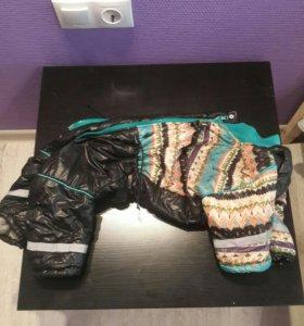 Одежда на собачку
