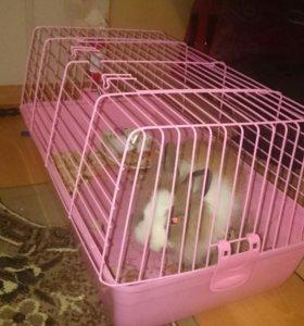 Продаю кролика.