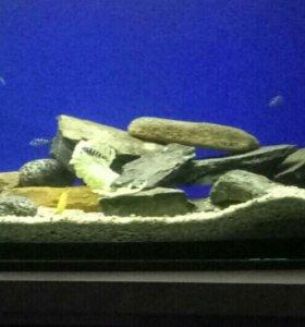 Скала в аквариум